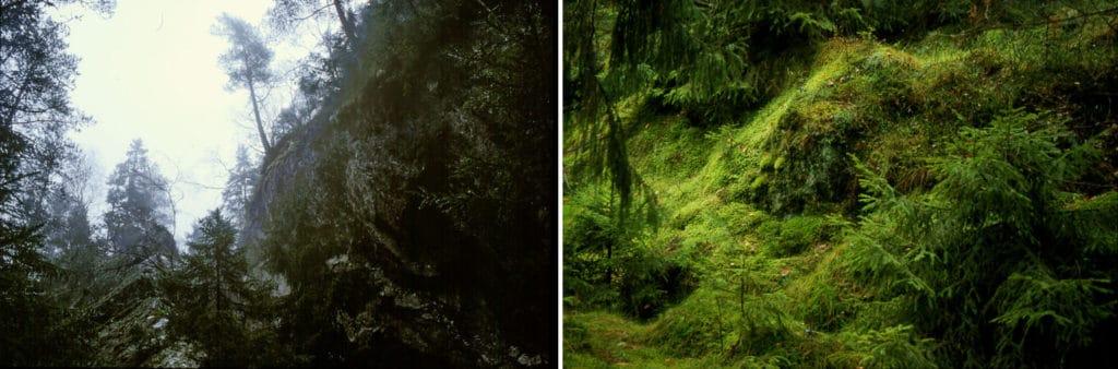Skogen och Stigen