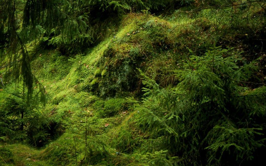 Gruva – ett reportage om fältspatsgruvorna på Orust